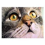 Kit de pintura de diamante Cat 5D para adultos, bordado completo de cristal, punto de cruz, arte de pared, 30 x 40 cm