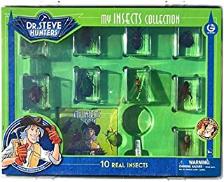 Dr. Steve Hunters My Insects Collection - 10 Real Insects