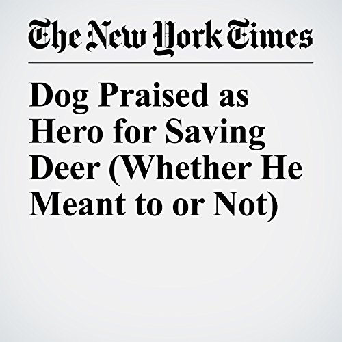 『Dog Praised as Hero for Saving Deer (Whether He Meant to or Not)』のカバーアート
