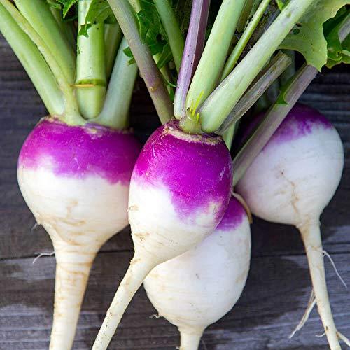 Outsidepride Purple Top Turnip Seed - 10 LBS