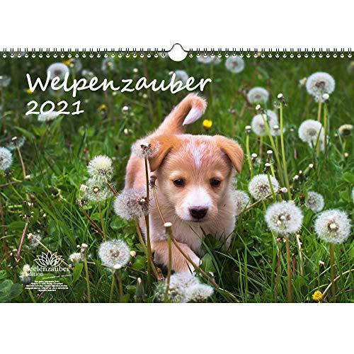 Calendario 2021 per cuccioli di cane, formato DIN A3, set regalo, contenuto: 1 calendario, 1 biglietto di auguri di Natale e 1 biglietto di auguri (totale 3 pezzi)