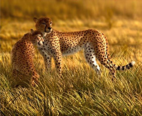 Fotobehang FTNxxl0420 vlies fotobehang, non-woven, luipaarden, 330 x 255 cm, 3-delig