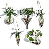 KNIKGLASS - Juego de 5 jarrones de cristal geométricos para plantas de agua o flores, mon...