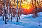 Snowy Birch Tree Forest Colorful Winter Sunset Photo Cool Wall Decor Art Print Poster 18x12