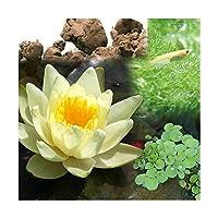 (ビオトープ)(めだか)ビオ植物とメダカセット 睡蓮(スイレン) 黄 鉢なしセット 本州四国限定