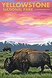 Yellowstone National Park–Bison und Sonnenuntergang,