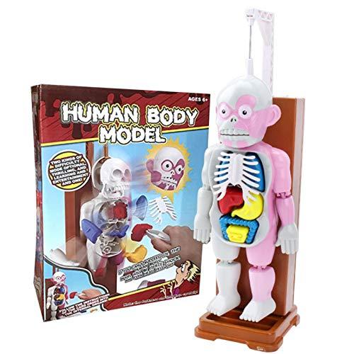 Lingge 人体模型 放課後の怪談シリーズ 恐怖 取り外し可能な人体器官 ドキドキクラッシュ ゾクッ人体模型 3D解剖学 科学 教育モデル 人体解剖学胴体モデル elegance