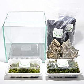 コケのインテリア コケリウム 栽培キット テラリウム キット 苔盆栽 セット コケリウムキット 20cmキューブ2(フタ付)
