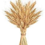 100-Stems-Golden-Dried-Wheat-Sheaves-Bundle-Premium-Autumn-Arrangements-Full-Wholesale-DIY-Home-Table-Wedding-Xmas-Decor