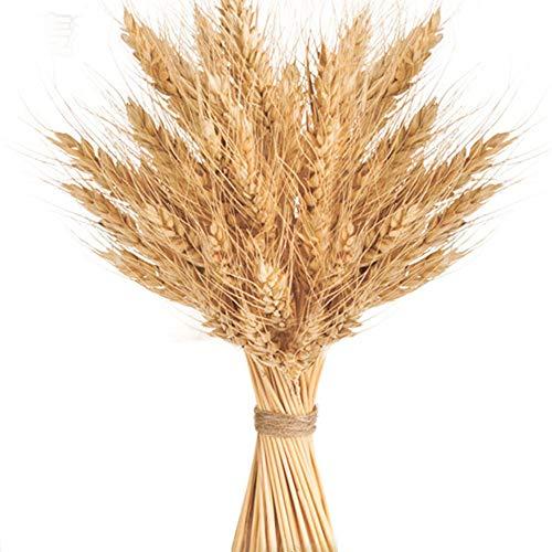 100 Stems Golden Dried Wheat Sheaves Bundle Premium Autumn Arrangements Full Wholesale DIY Home Table Wedding Xmas Decor