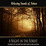 A Night in the Forest (Nature Sounds)