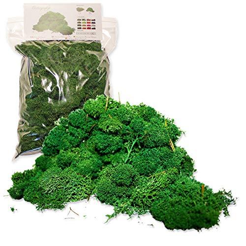 Liquen Preservado Premium 500 gr. Color Verde Bosque. Uso: Cuadros Vegetales Preservados, Diorama, Presepio, Modelismo. Musgo Preservado.