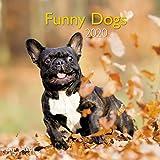 Funny Dogs 2020 A&I - Broschürenkalender - 30x30cm - Wandkalender