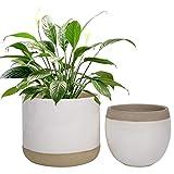 LA JOLIE MUSE 植木鉢 プランター 2個セット 陶器 ひび模様 インドア 植物
