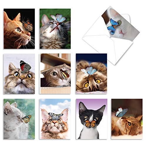 The Best Card Company - 10 All Occasion Blank Cat Cards (4 x 5.12 Inch) - Cute Assorted Bulk Card Set - On The Nose M4947OCB-B1x10