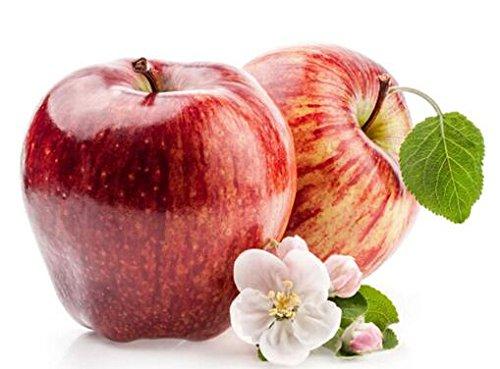 bonsaï nain 50 graines cueillir des fruits délicieux dans votre jardin facile -growing Bonsai FruitFree Livraison 9