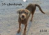 Straßenhunde 2020 (Wandkalender 2020 DIN A4 quer)
