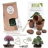 Bonsai Kit incl. eBook GRATUITO - Set con macetas de coco, semillas y tierra - idea de regalo sostenible para los amantes de las plantas (Rosa del Desierto + Secoya Gigante)