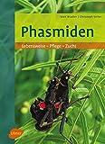 *Phasmiden: Lebensweise, Pflege, Zucht