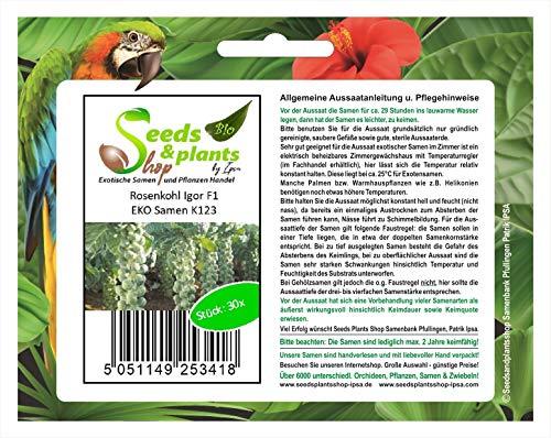 Stk - 30x Rosenkohl Igor F1 EKO - Samen Gemüse Garten Küche Pflanze K123 - Seeds Plants Shop Samenbank Pfullingen Patrik Ipsa