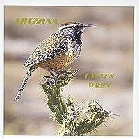 フローレン状態鳥–状態の鳥Arizona Cactus Wren–グリーティングカード Set of 6 Greeting Cards