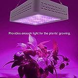 1200W Grow LED Coltivazione Indoor Lampada Piante Interno, LED per Piante, Spettro Completo per Serra e Indoor Hydroponic Pianta Fioritura Veg Growing Lamps Meno Calore e Maggiori Rendimenti