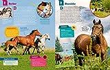 WAS IST WAS Pferde und Ponys: Reiten, Fohlen, Pferdesprache, Turniere, Zucht und Pflegepferd! (WAS IST WAS Edition) - 5