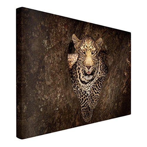 Bilderwelten Leinwandbild - Leopard ruht auf einem Baum - Quer 2:3, 60cm x 90cm
