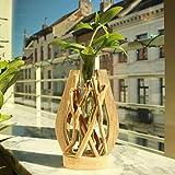 Jarrón de cristal | único terrario | hecho a mano, madera natural | Declaración de casa | Planta en agua