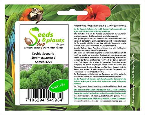 Stk - 25x Kochia Scoparia Sommerzypresse Pflanzen - Samen #221 - Seeds Plants Shop Samenbank Pfullingen Patrik Ipsa