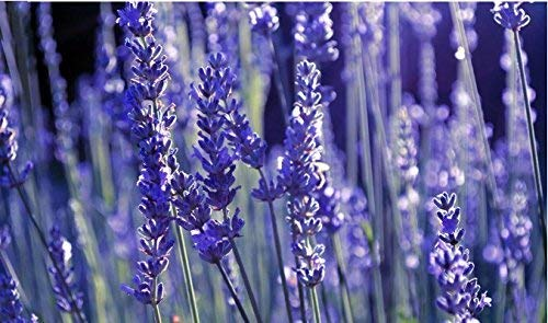 20 graines / pack de graines de fleurs de lavande de haute qualité pour Deodorise lavande bain parfumé décoration à la maison livraison gratuite