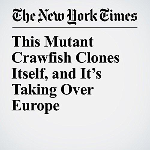 This Mutant Crawfish Clones Itself, and It's Taking Over Europe copertina