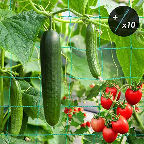 lampox Ranknetz für Gurken, Himbeeren, Tomaten und andere Gemüsepflanzen - Rankhilfe für Sträucher und Kletterpflanzen, inkl. 10x Pflanzenbinder, Größe: 5 x 2m