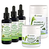 Biotraxx Leber- und Gallenreinigung Intensiv-Kur-Programm mit natürlichen Heilkräutern 3x 50ml Tinktur plus 300g Chlorella