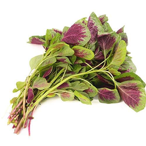 Bloom Green Co. Amaranthus Tricolor Bonsai Frühe Splendor Bonsai Seltene Gemüse Bonsai Topfpflanze Essbare Bonsai 100 Stück
