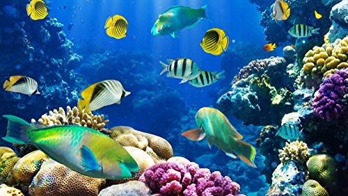 Conradsha - 1000 piezas Puzzle - Océano, bajo el agua, peces, corales, arrecifes de coral - Rompecabezas para niños adultos juego creativo rompecabezas Navidad decoración del hogar regalo