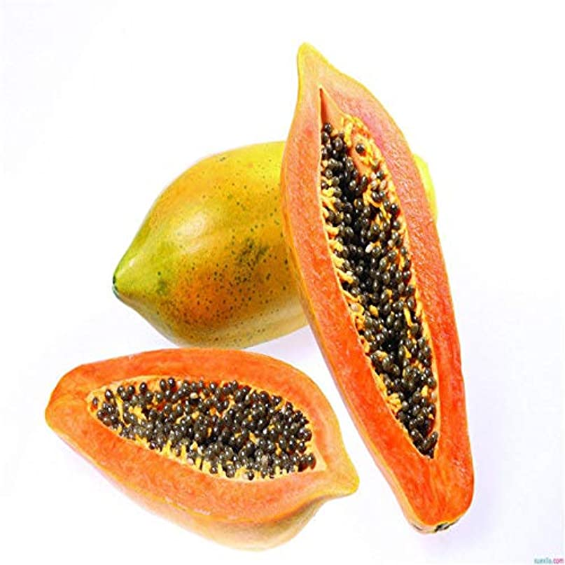 200脚:Suntoday PAPAYA N FRUIT TREEカリカPapaya20Pcs
