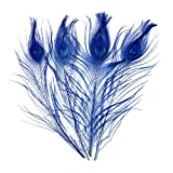 20pcs Peacock Tail Feathers Bleached Dyeing Peacock Feathers for Crafts Decoration 9-12inch Royal Blue