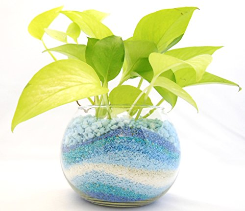 観葉 植物 ライムポトス ハイドロカルチャー ガラス植え ブルー ボウルS お手入れ簡単 お祝い ギフトに最適 室内で安心な土を使わない 水耕栽培 お部屋にグリーンを置いてきれいな空気でリラックス