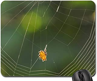 Mouse Pads - Spider Web Arachnid Insect Colombia 1