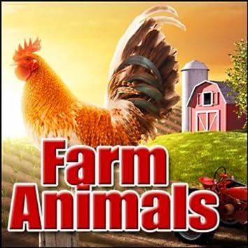 Farm Animals: Sound Effects