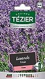 Tezier - Lavande Vraie - Fleurs vivaces