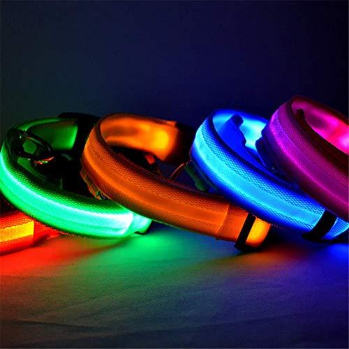 Vektenxi LED Hundehalsband beleuchtet Halsbänder im Dunkeln leuchten Machen Haustiere sicher vor Gefahr Premium-Qualität