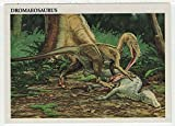Dromaeosaurus - Dinosaurs: The Mesozoic Era (Trading Card) # 19 - Redstone Marketing 1993 Mint