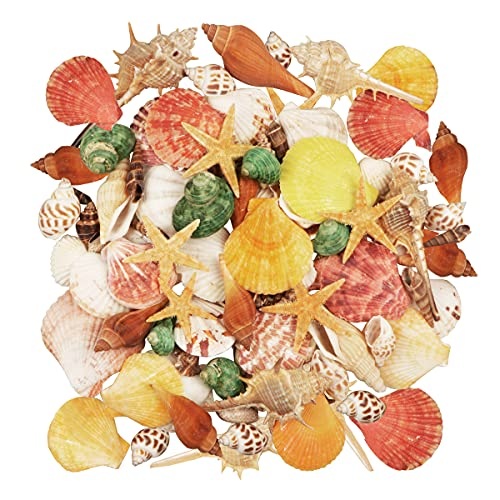 Seashells 15 Kinds of Shells 100 PCS Mixed Ocean Beach Colorful Seashells with Starfish Perfect for Home Decoration, Art Craft, Fish Tank and Vase Filler