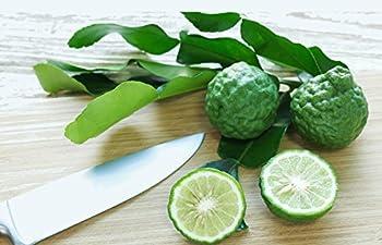 Kaffir Lime Tree - Fruit Bearing Size - 4 x 12  Pot - NO SHIP TX,FL,AZ,CA,LA,HI