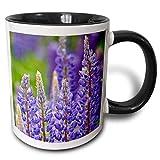 Taza Canadá, Isla del Príncipe Eduardo, flores de lupino-CN09 DBR0075 - Taza negra de dos tonos de...