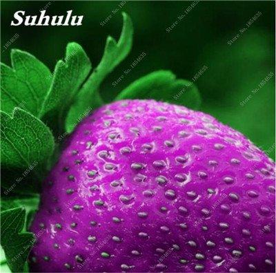 Big Promotion! 1000 Pcs Four Seasons en pot Graines Strawberry Super Sweet Seeds fruits Bonsai plantes Semences Maison et Jardin 21