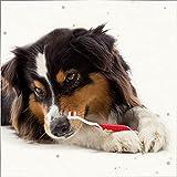 Beaphar 79015 Dog-A-Dent Zahnbürste - 4