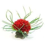 Jamicy ™ Peces Tanque Decoración de Flores Acuario Modelado Plantas de Paisajismo Ornamentales Acuáticas Plantas Decorativas Plantas Decorativas Simulación Waterweed (Rojo)